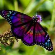 PinkButterflyy
