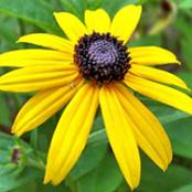 Wildflower44