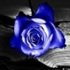 BlueWeepingRose