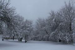 Winter in FB_IMG_1550256715971.jpg