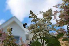 Bees amaze me