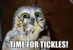 Because I LOVE owls!!!!